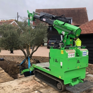 How to plant a heavy root ball tree using a hooka mini tracked crawler crane lifts heavy trees easily on sites with restricted access lifting 1500kg