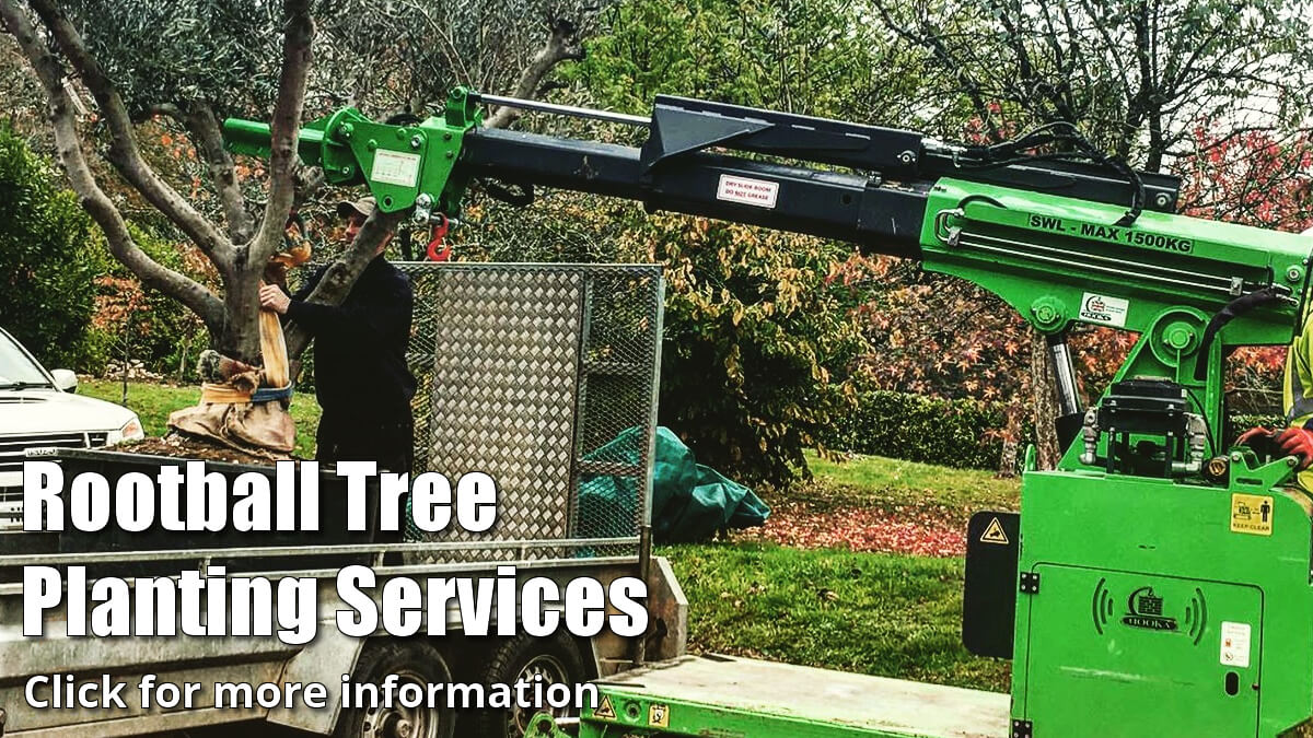 Rootball Tree Planting Services Click for more information